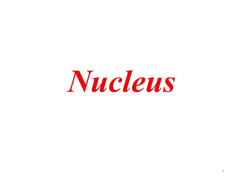 3 Nucleus
