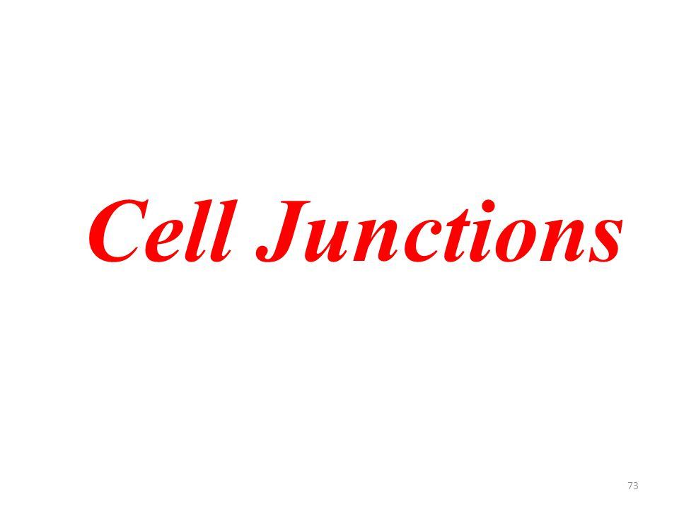73 Cell Junctions
