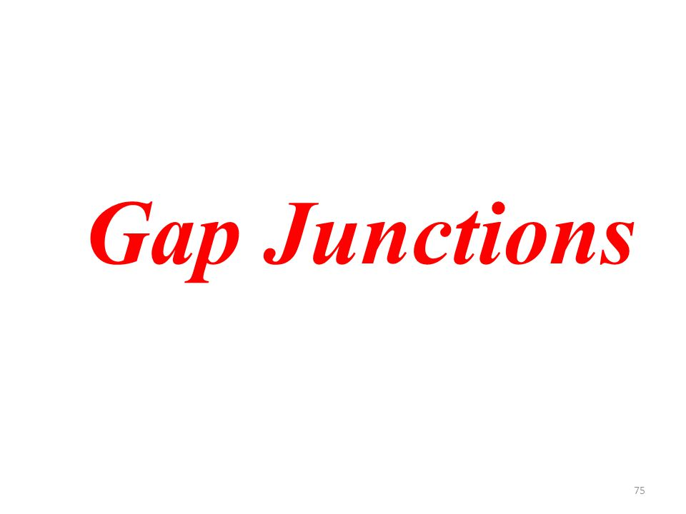 75 Gap Junctions