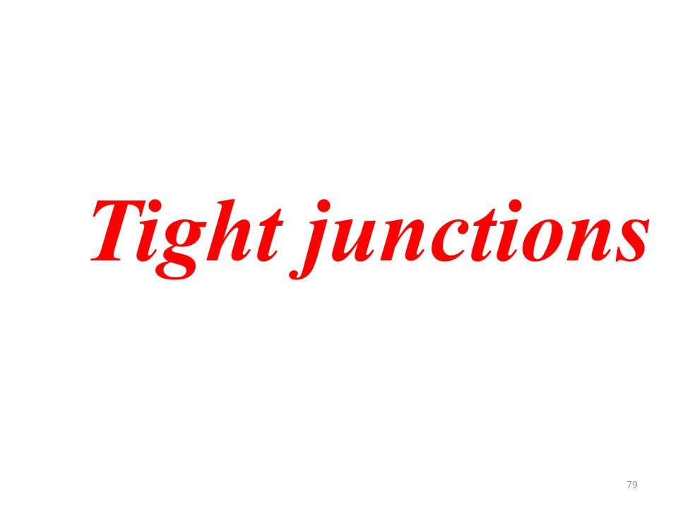 79 Tight junctions