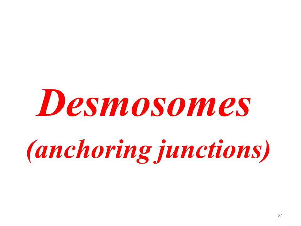 81 Desmosomes (anchoring junctions)