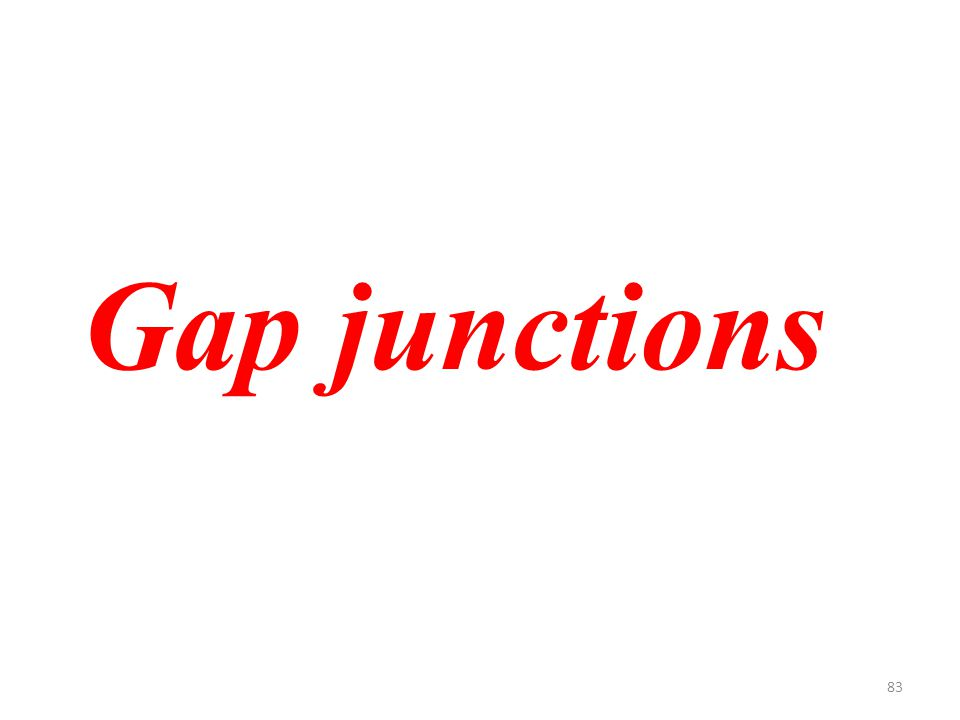 83 Gap junctions