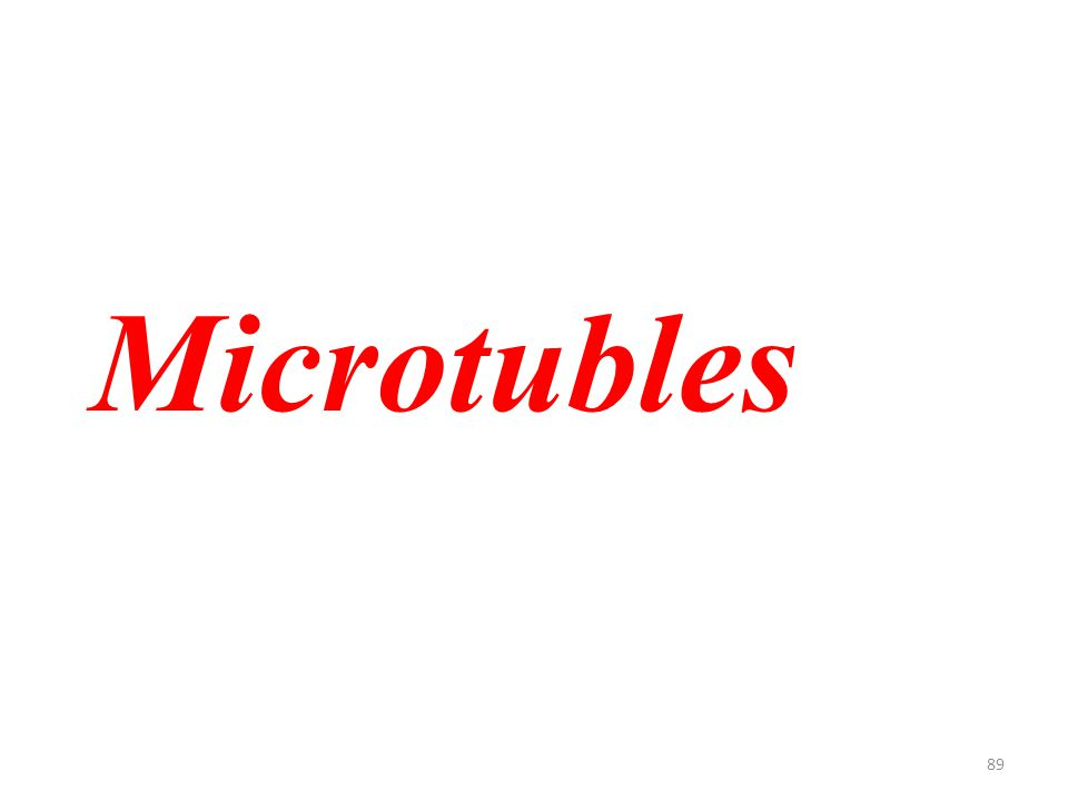89 Microtubles