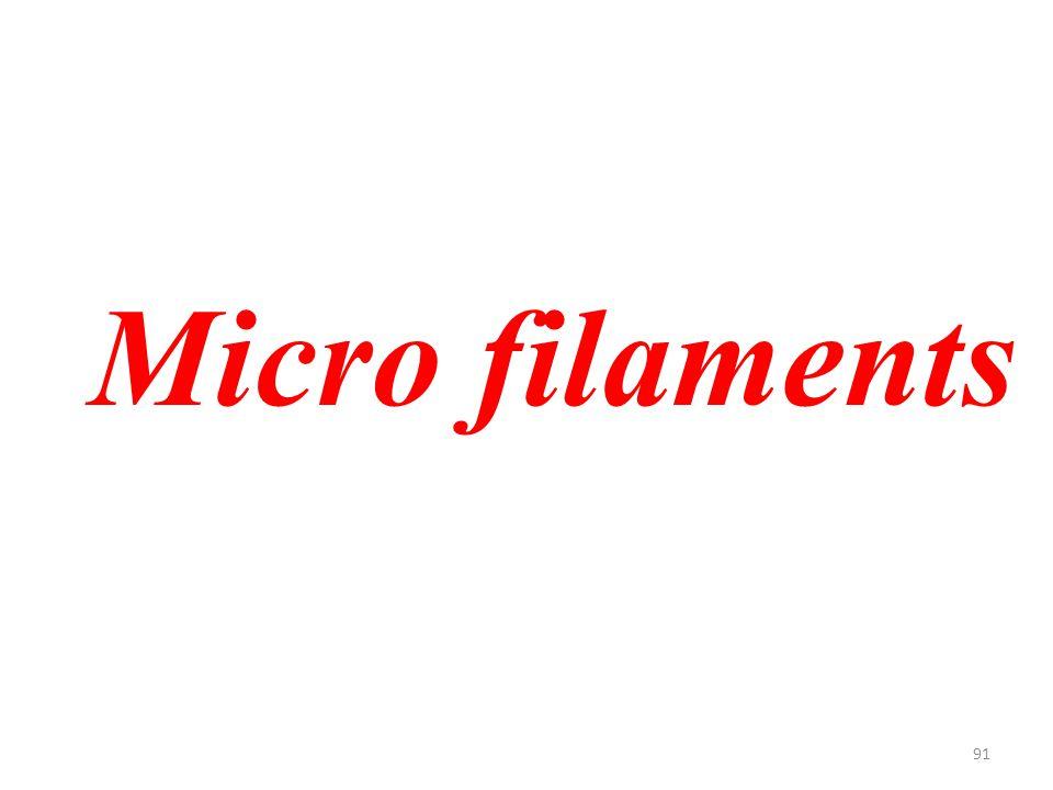 91 Micro filaments
