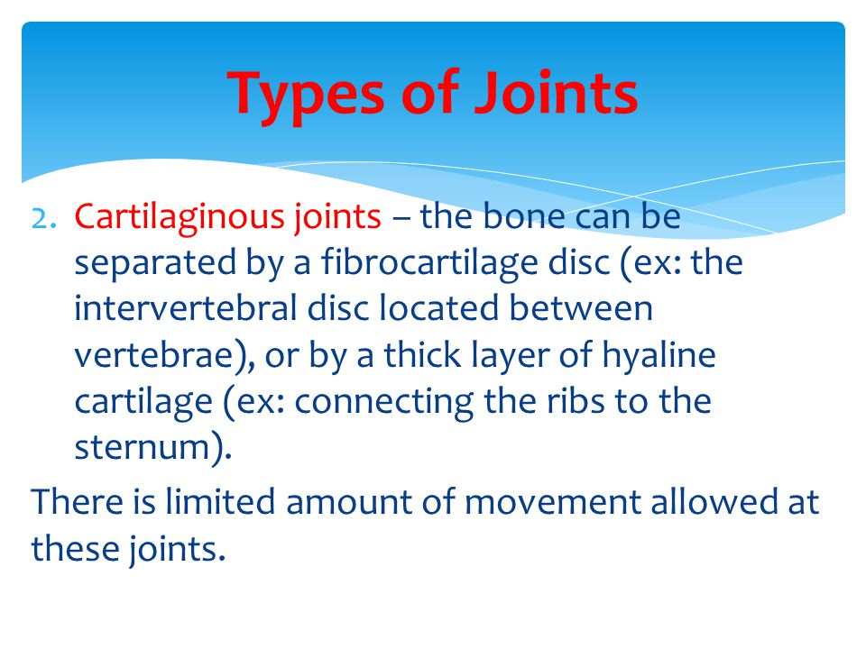 2.Cartilaginous joints – the bone can be separated by a fibrocartilage disc (ex: the intervertebral disc located between vertebrae), or by a thick layer of hyaline cartilage (ex: connecting the ribs to the sternum).
