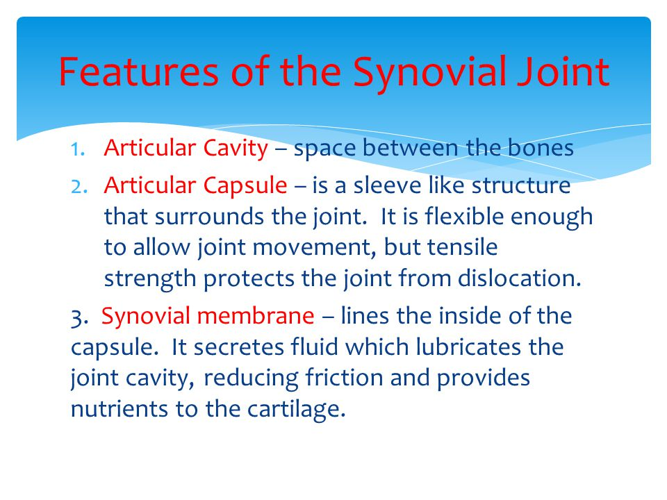 1.Articular Cavity – space between the bones 2.Articular Capsule – is a sleeve like structure that surrounds the joint.