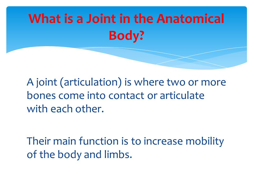 A joint (articulation) is where two or more bones come into contact or articulate with each other. Their main function is to increase mobility of the