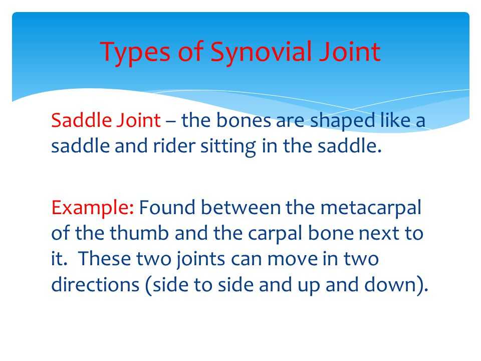 Saddle Joint – the bones are shaped like a saddle and rider sitting in the saddle. Example: Found between the metacarpal of the thumb and the carpal b