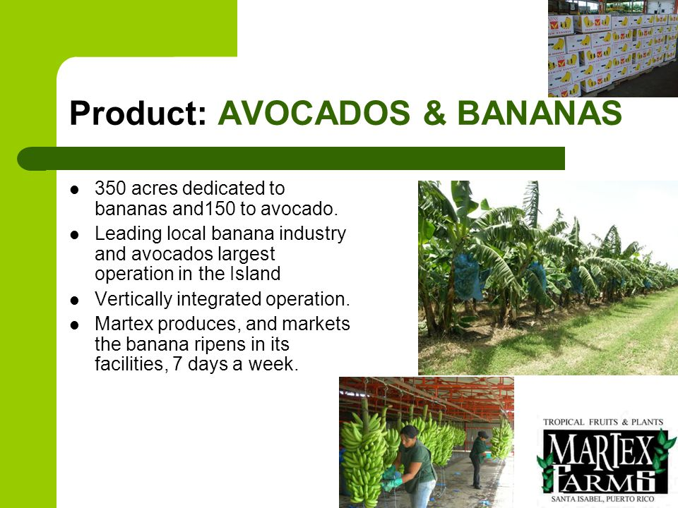 Products: PROCESSED ADDED VALUE PRODUCTS: - COOKED GREEN BANANAS - Peeled, pre-cooked and ready to eat.