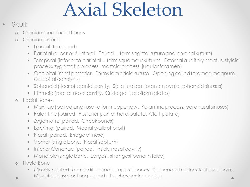 Axial Skeleton Skull: o Cranium and Facial Bones o Cranium bones: Frontal (forehead) Parietal (superior & lateral. Paired… form sagittal suture and co