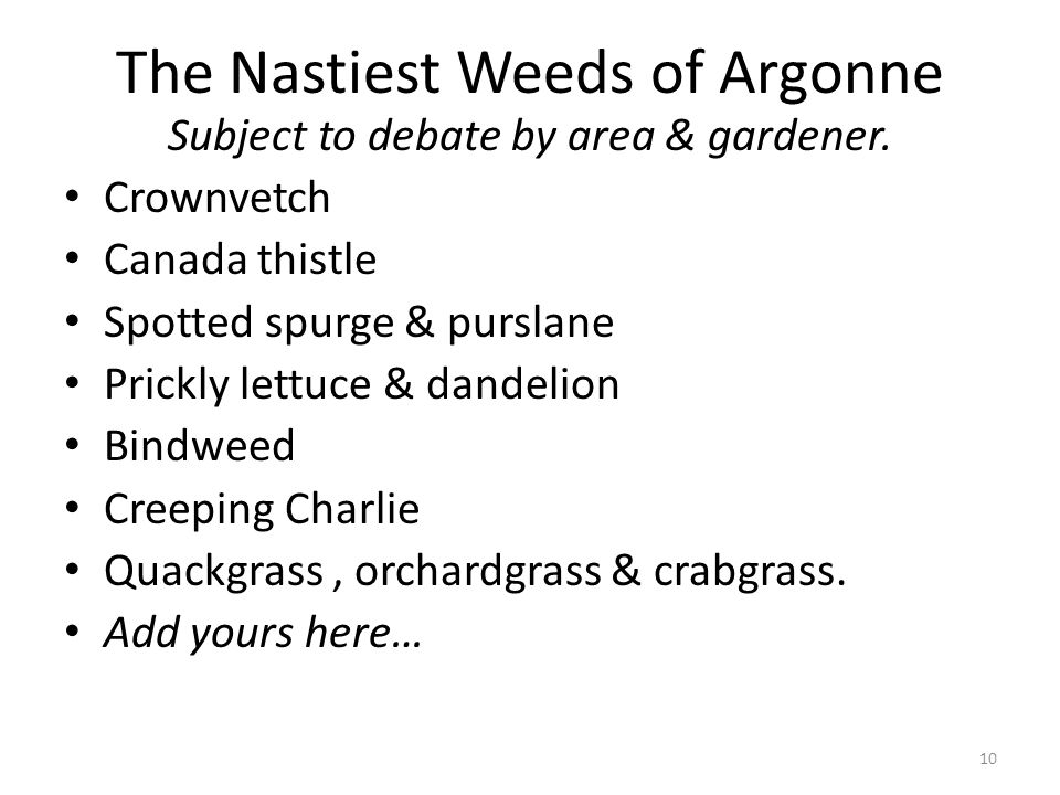 The Nastiest Weeds of Argonne Subject to debate by area & gardener.