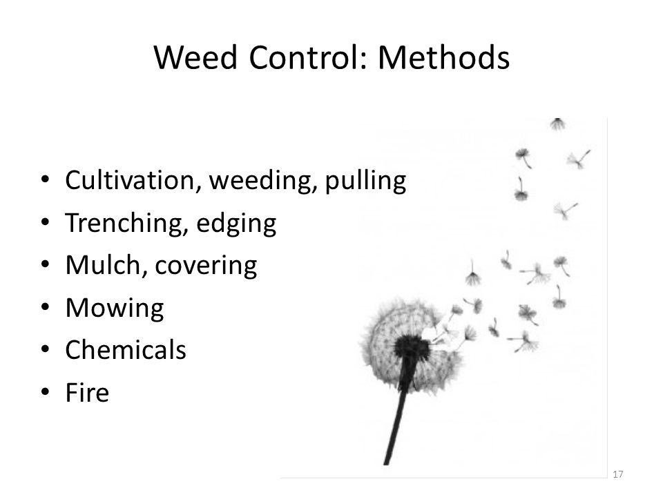 Weed Control: Methods Cultivation, weeding, pulling Trenching, edging Mulch, covering Mowing Chemicals Fire 17