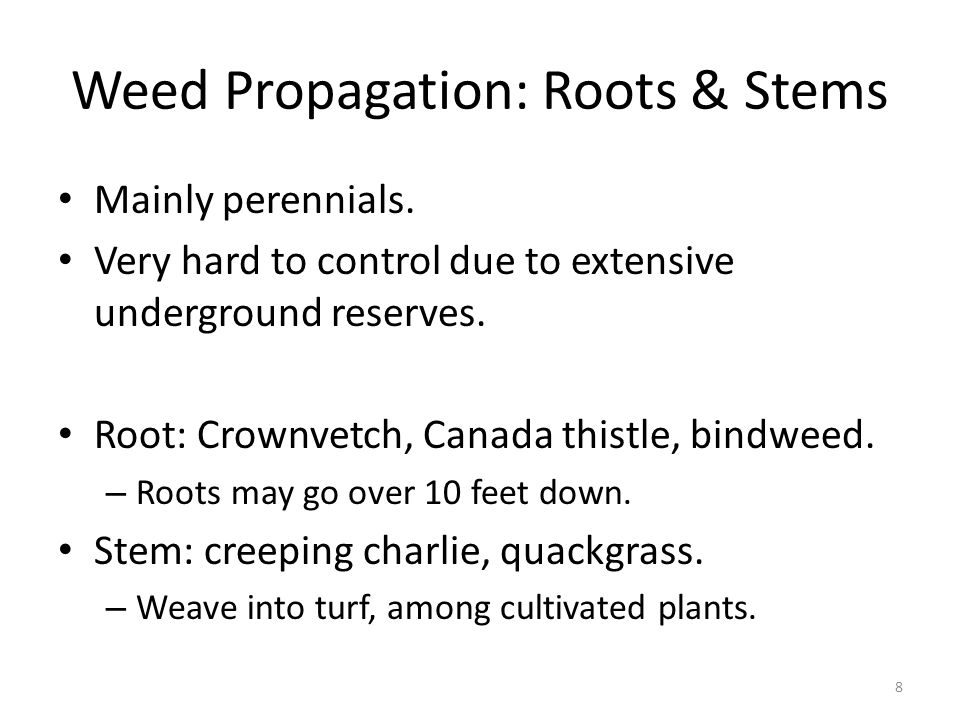 Weed Propagation: Seeds Mainly annuals/biennials.Fast growing early in season (cool season).