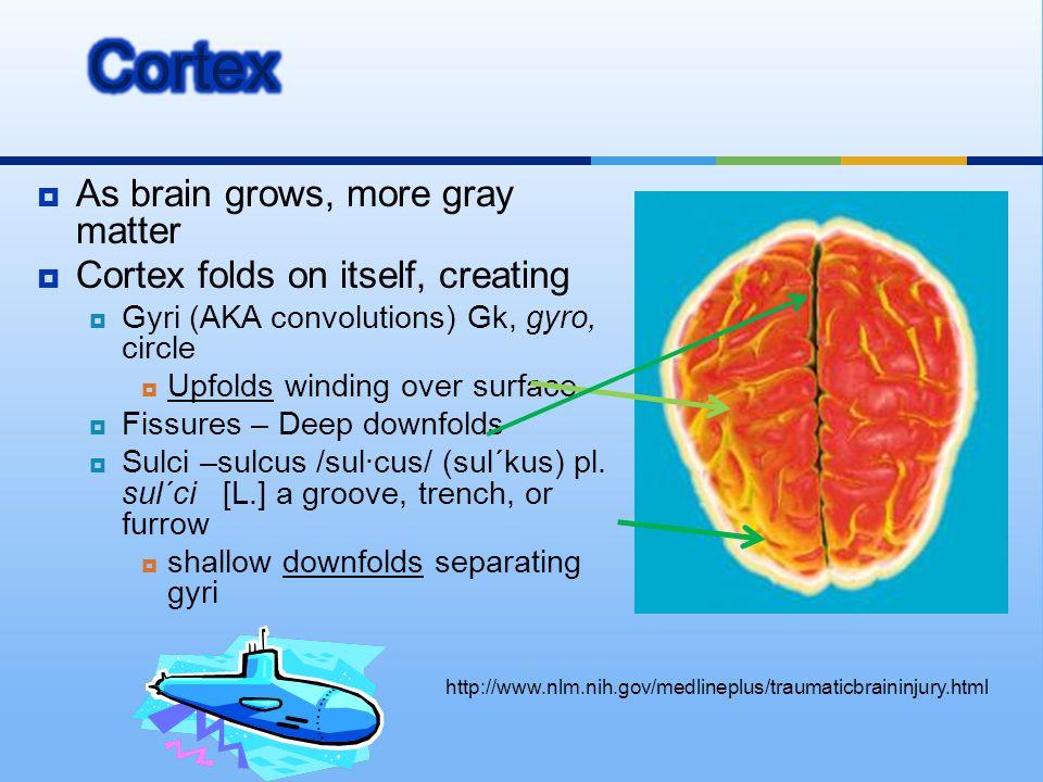  As brain grows, more gray matter  Cortex folds on itself, creating  Gyri (AKA convolutions) Gk, gyro, circle  Upfolds winding over surface  Fiss