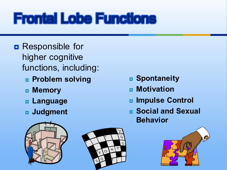  Responsible for higher cognitive functions, including:  Problem solving  Memory  Language  Judgment  Spontaneity  Motivation  Impulse Control