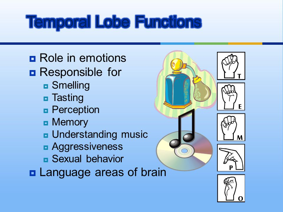  Role in emotions  Responsible for  Smelling  Tasting  Perception  Memory  Understanding music  Aggressiveness  Sexual behavior  Language ar
