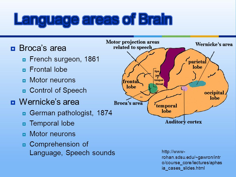  Broca's area  French surgeon, 1861  Frontal lobe  Motor neurons  Control of Speech  Wernicke's area  German pathologist, 1874  Temporal lobe