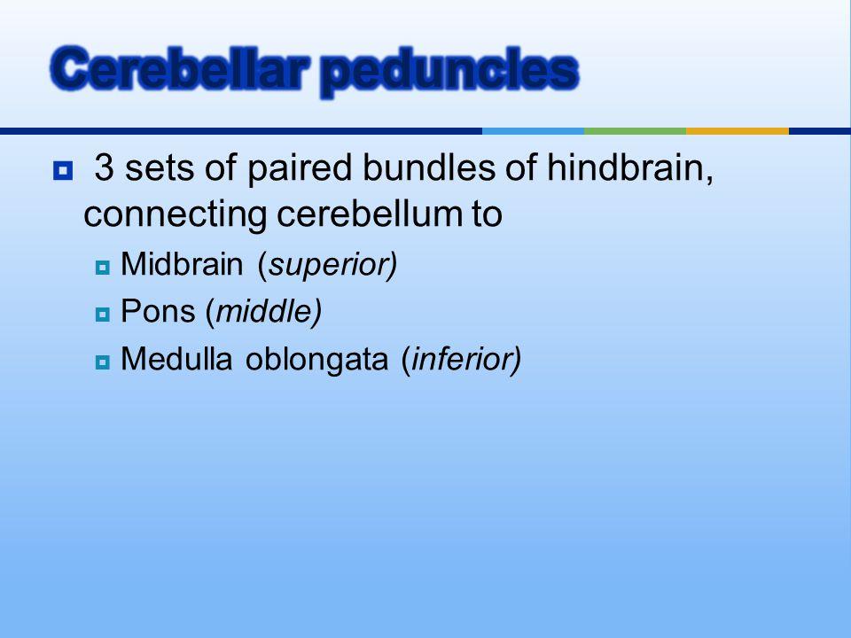  3 sets of paired bundles of hindbrain, connecting cerebellum to  Midbrain (superior)  Pons (middle)  Medulla oblongata (inferior)