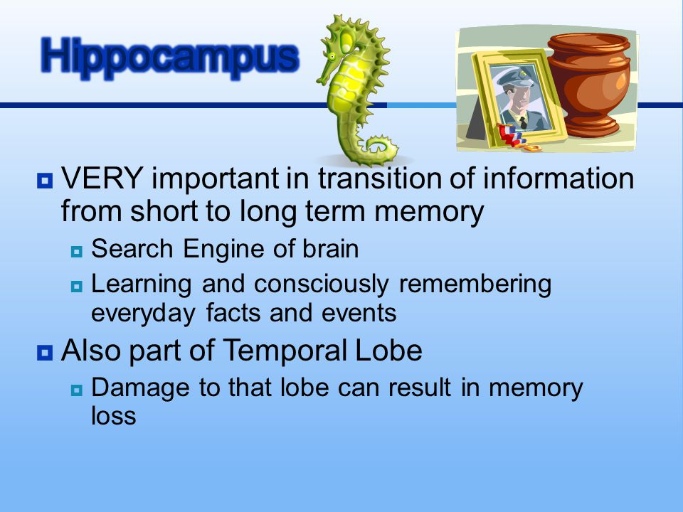  VERY important in transition of information from short to long term memory  Search Engine of brain  Learning and consciously remembering everyday