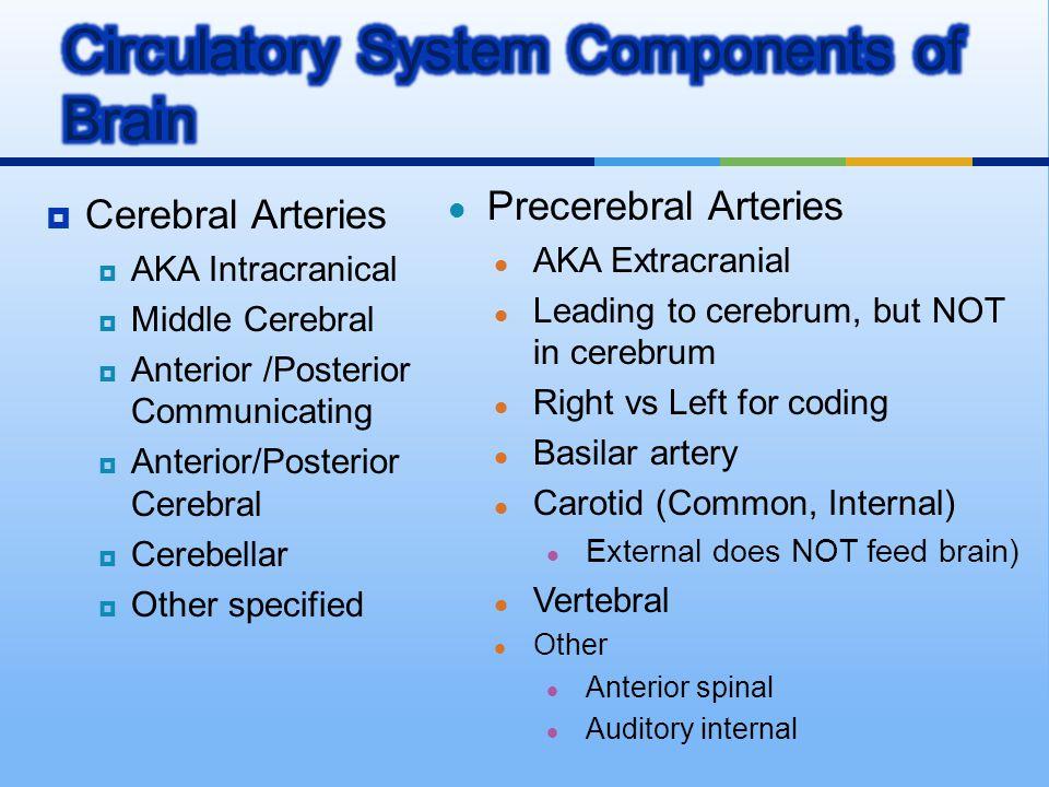 Cerebral Arteries  AKA Intracranical  Middle Cerebral  Anterior /Posterior Communicating  Anterior/Posterior Cerebral  Cerebellar  Other speci