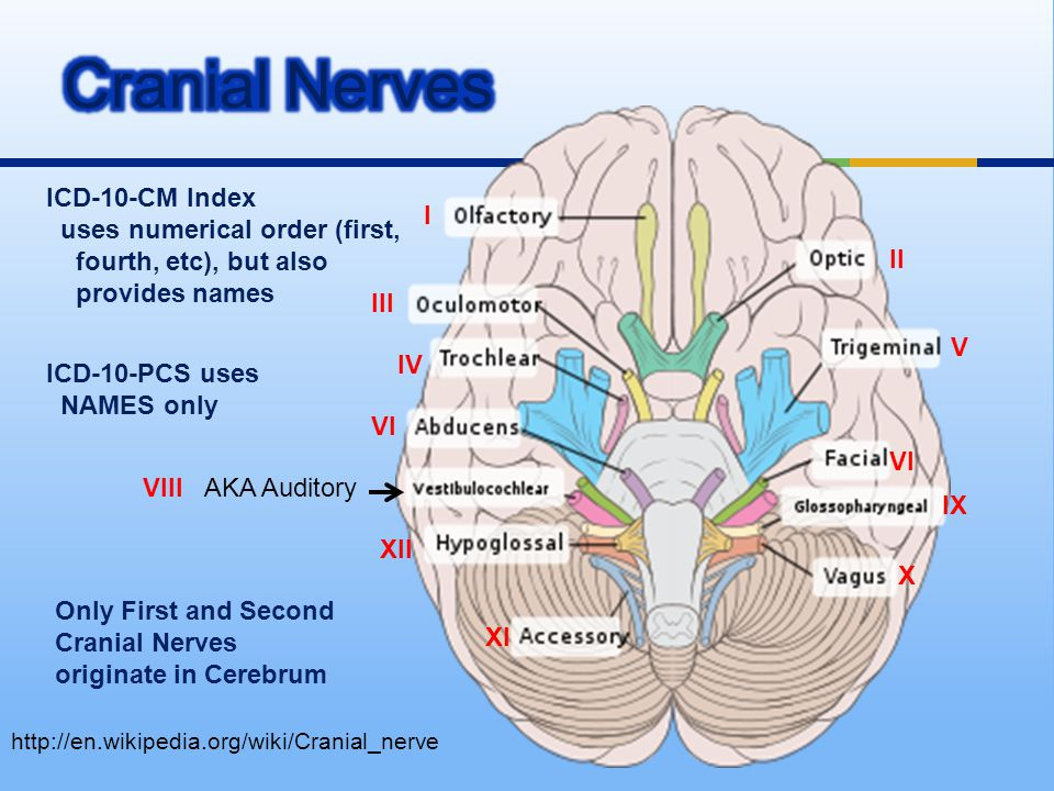 http://en.wikipedia.org/wiki/Cranial_nerve AKA Auditory ICD-10-CM Index uses numerical order (first, fourth, etc), but also provides names ICD-10-PCS