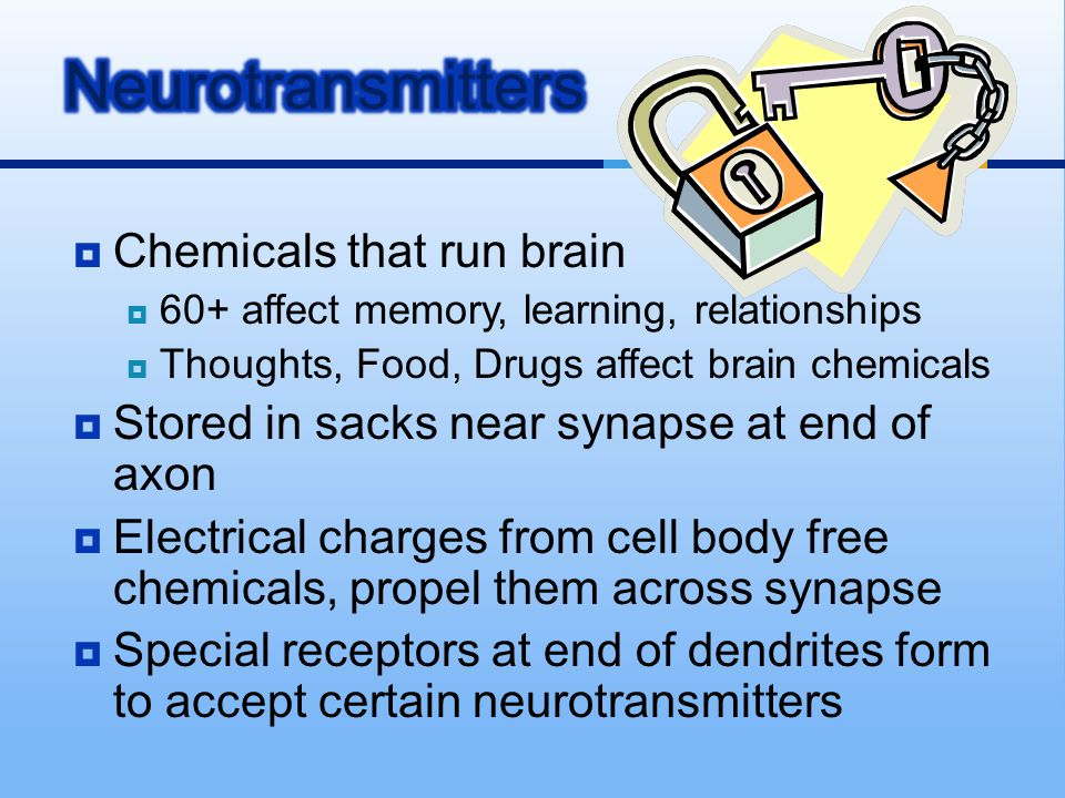  Chemicals that run brain  60+ affect memory, learning, relationships  Thoughts, Food, Drugs affect brain chemicals  Stored in sacks near synapse