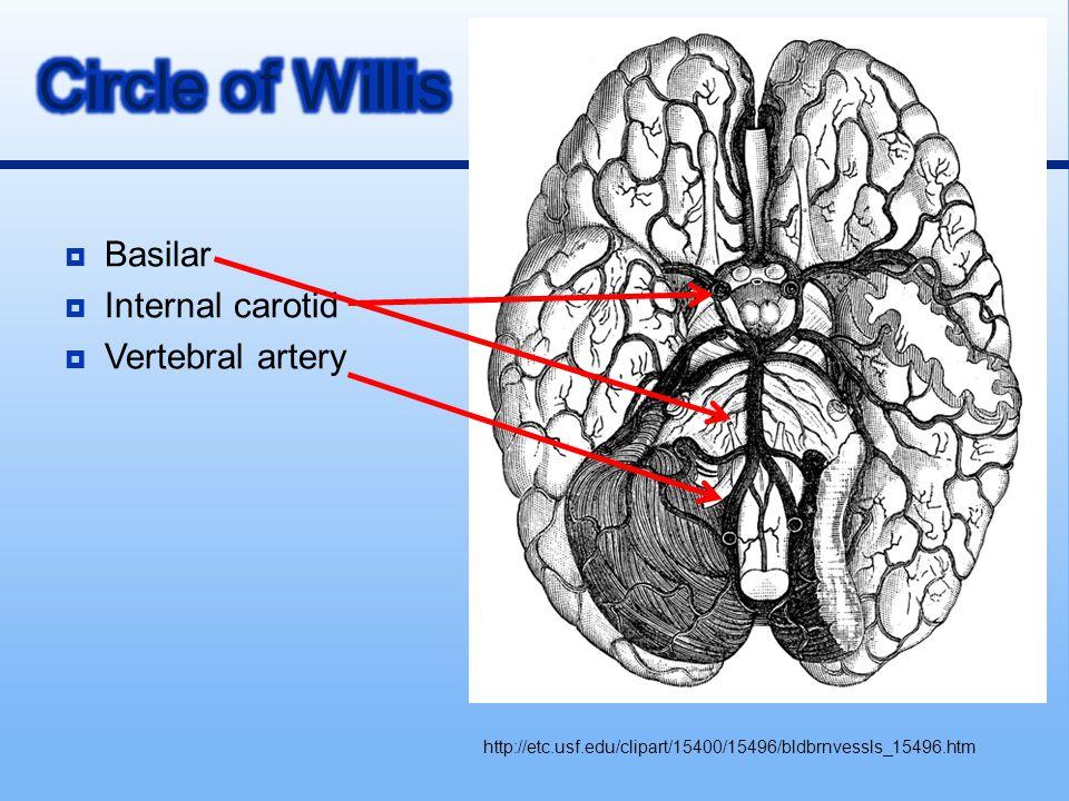  Basilar  Internal carotid  Vertebral artery http://etc.usf.edu/clipart/15400/15496/bldbrnvessls_15496.htm