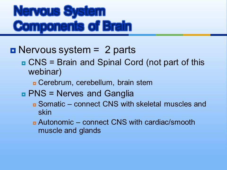  Nervous system = 2 parts  CNS = Brain and Spinal Cord (not part of this webinar)  Cerebrum, cerebellum, brain stem  PNS = Nerves and Ganglia  So