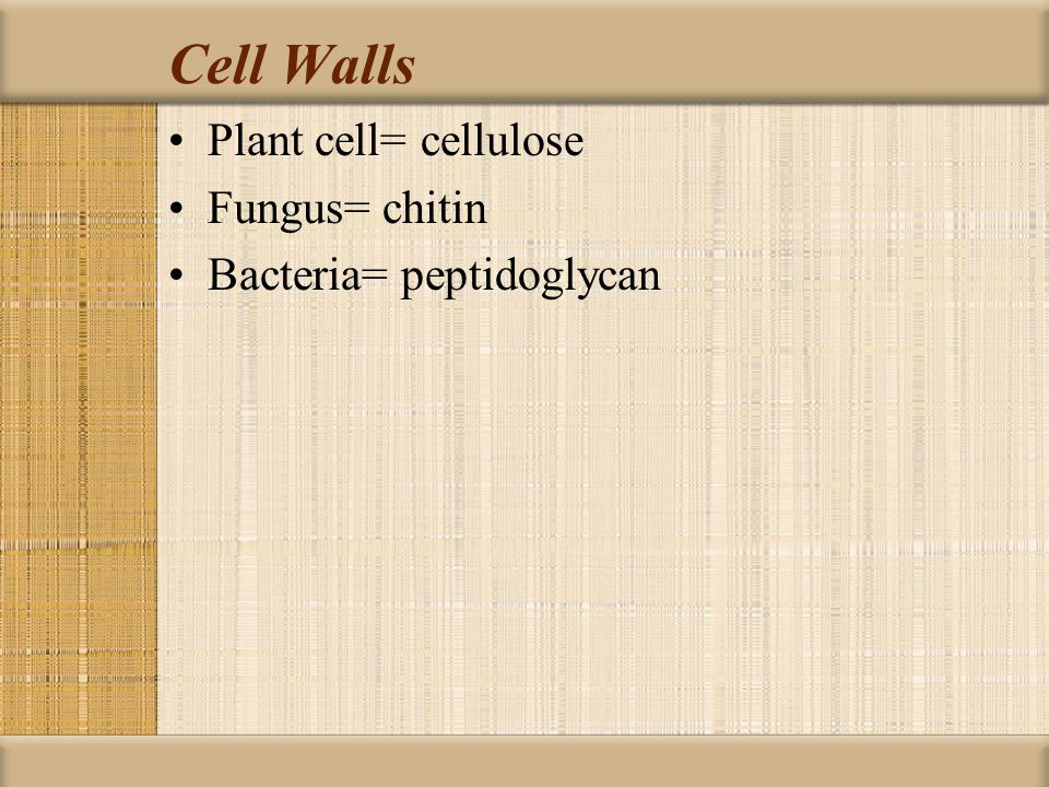 Cell Walls Plant cell= cellulose Fungus= chitin Bacteria= peptidoglycan