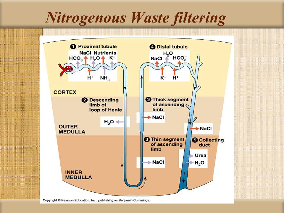 Nitrogenous Waste filtering