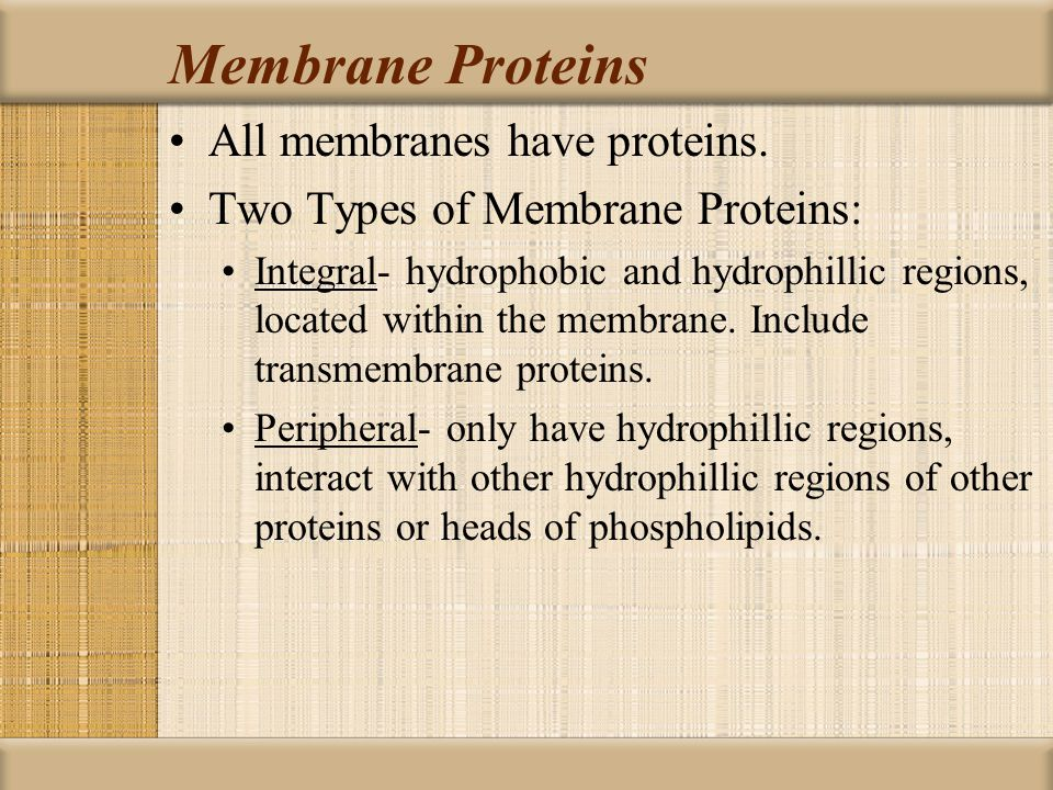 Membrane Proteins All membranes have proteins. Two Types of Membrane Proteins: Integral- hydrophobic and hydrophillic regions, located within the memb