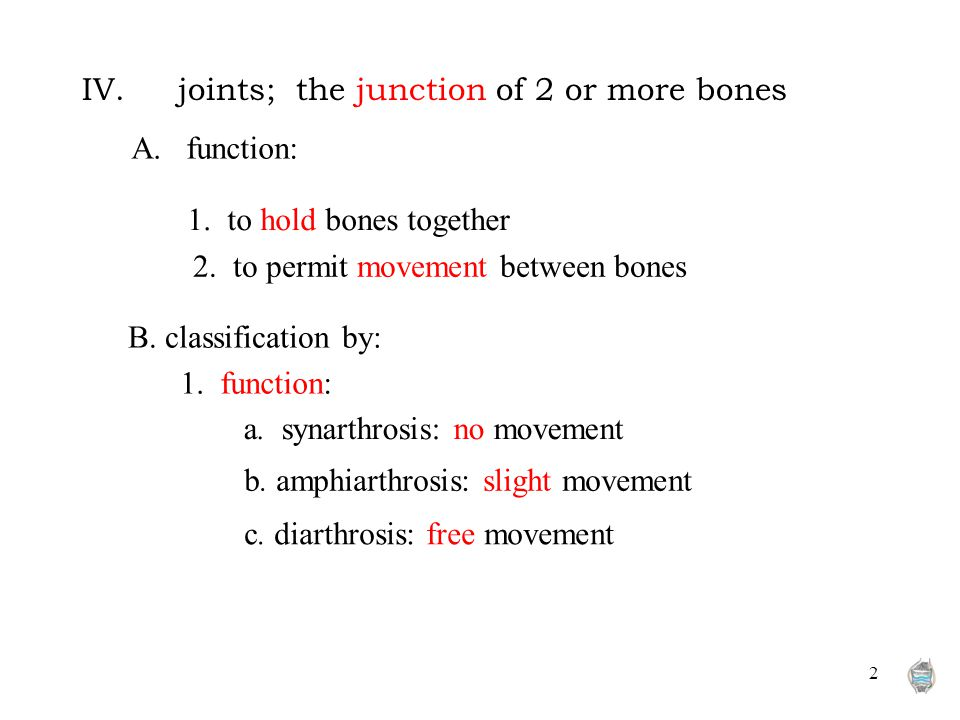 2 IV.joints; the junction of 2 or more bones A. function: 1. to hold bones together 2. to permit movement between bones a. synarthrosis: no movement b