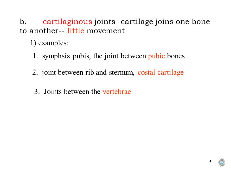 5 b.cartilaginous joints- cartilage joins one bone to another-- little movement 1. symphsis pubis, the joint between pubic bones 2. joint between rib