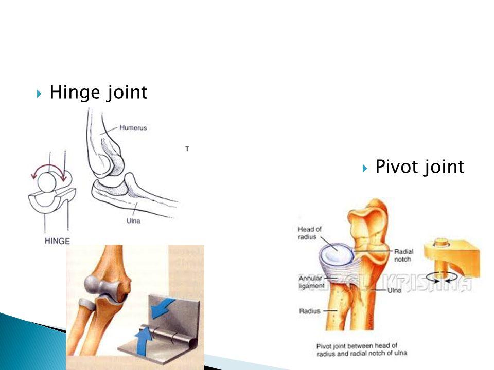  Hinge joint  Pivot joint