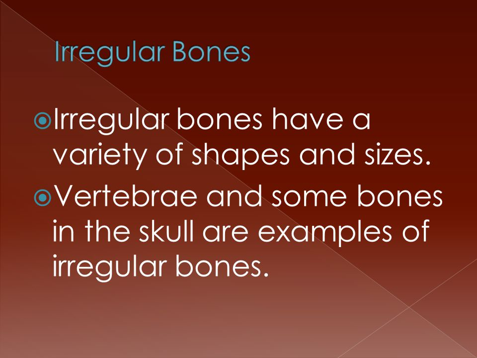  Irregular bones have a variety of shapes and sizes.  Vertebrae and some bones in the skull are examples of irregular bones.