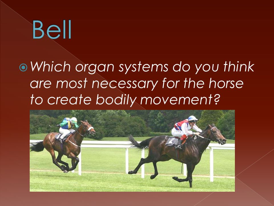  Which organ systems do you think are most necessary for the horse to create bodily movement