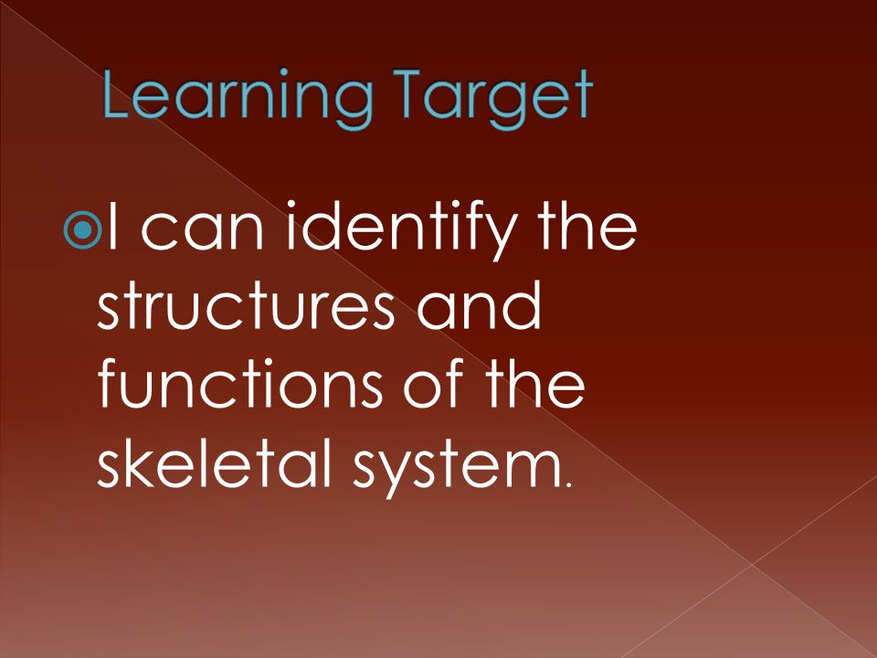  I can identify the structures and functions of the skeletal system.