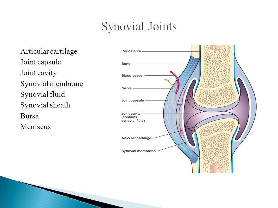 Articular cartilage Joint capsule Joint cavity Synovial membrane Synovial fluid Synovial sheath Bursa Meniscus