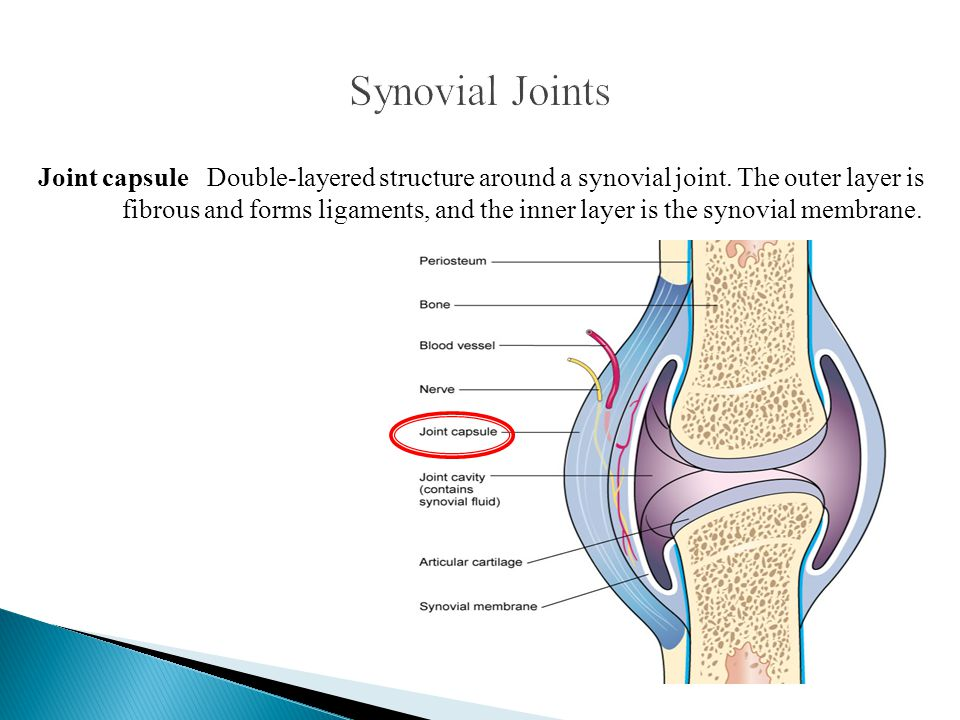 Joint capsule Double-layered structure around a synovial joint. The outer layer is fibrous and forms ligaments, and the inner layer is the synovial me