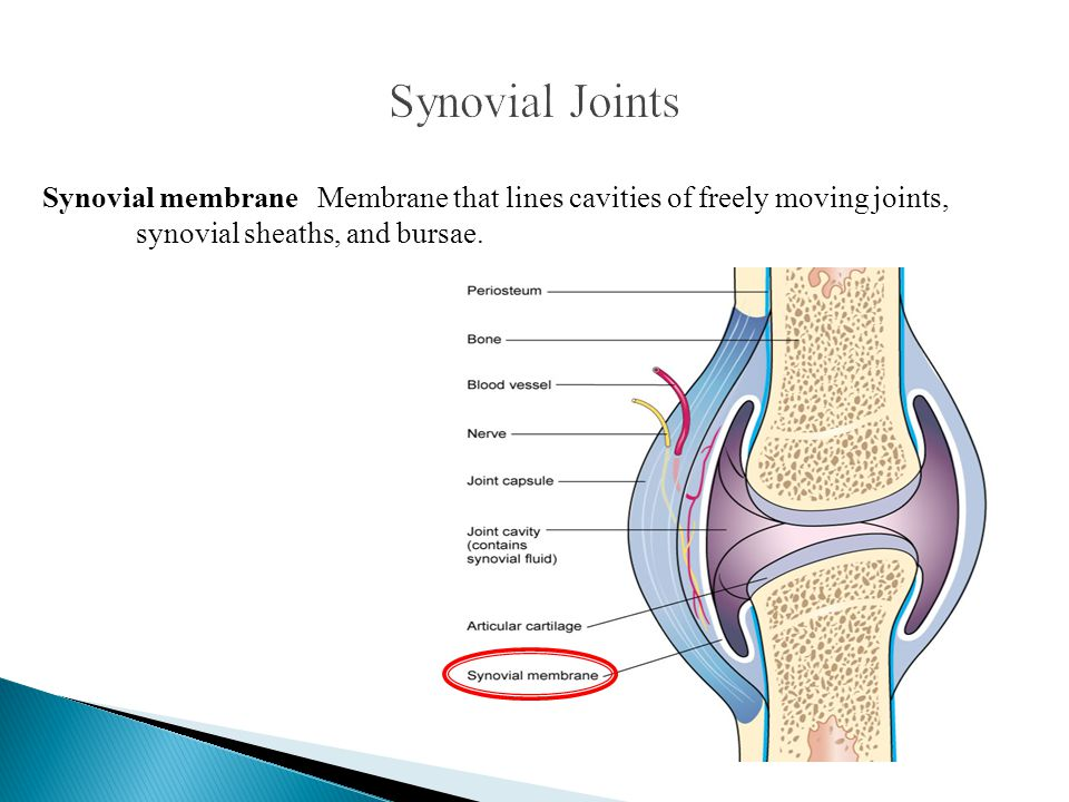 Synovial membrane Membrane that lines cavities of freely moving joints, synovial sheaths, and bursae.