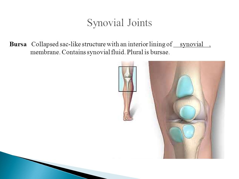 Bursa Collapsed sac-like structure with an interior lining of synovial, membrane. Contains synovial fluid. Plural is bursae.