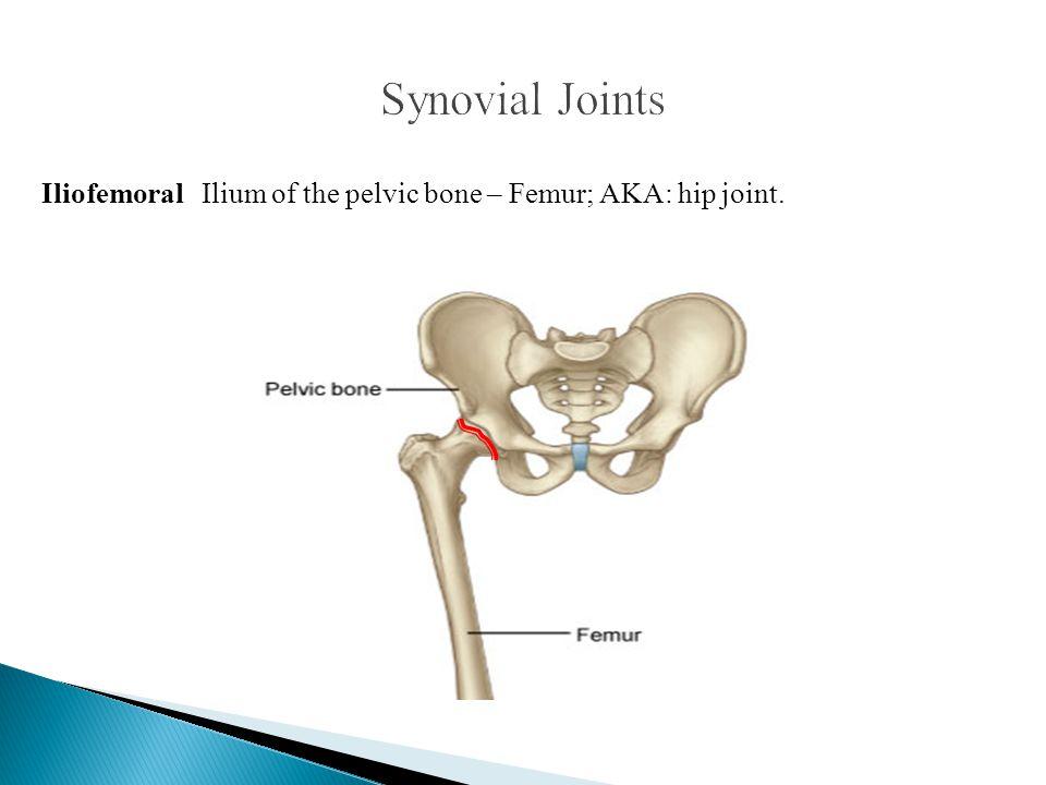 Iliofemoral Ilium of the pelvic bone – Femur; AKA: hip joint.