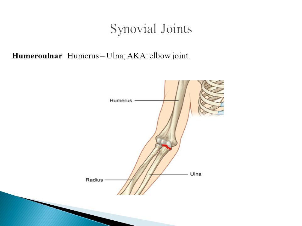 Humeroulnar Humerus – Ulna; AKA: elbow joint.