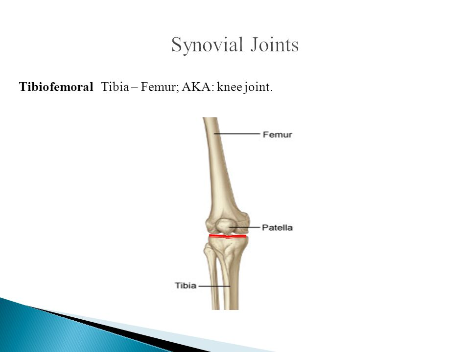 Tibiofemoral Tibia – Femur; AKA: knee joint.