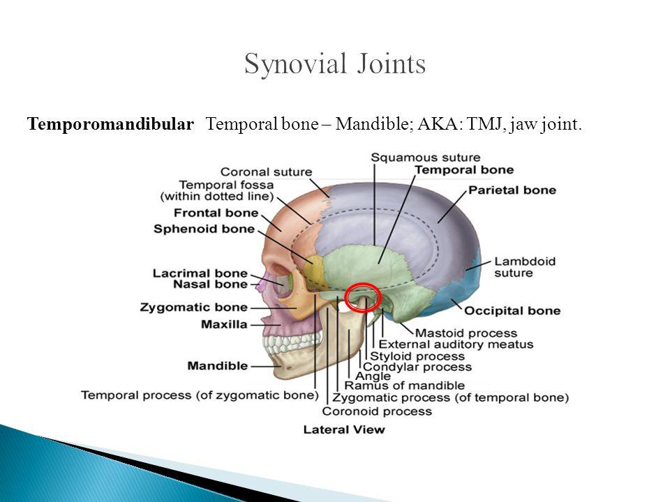Temporomandibular Temporal bone – Mandible; AKA: TMJ, jaw joint.