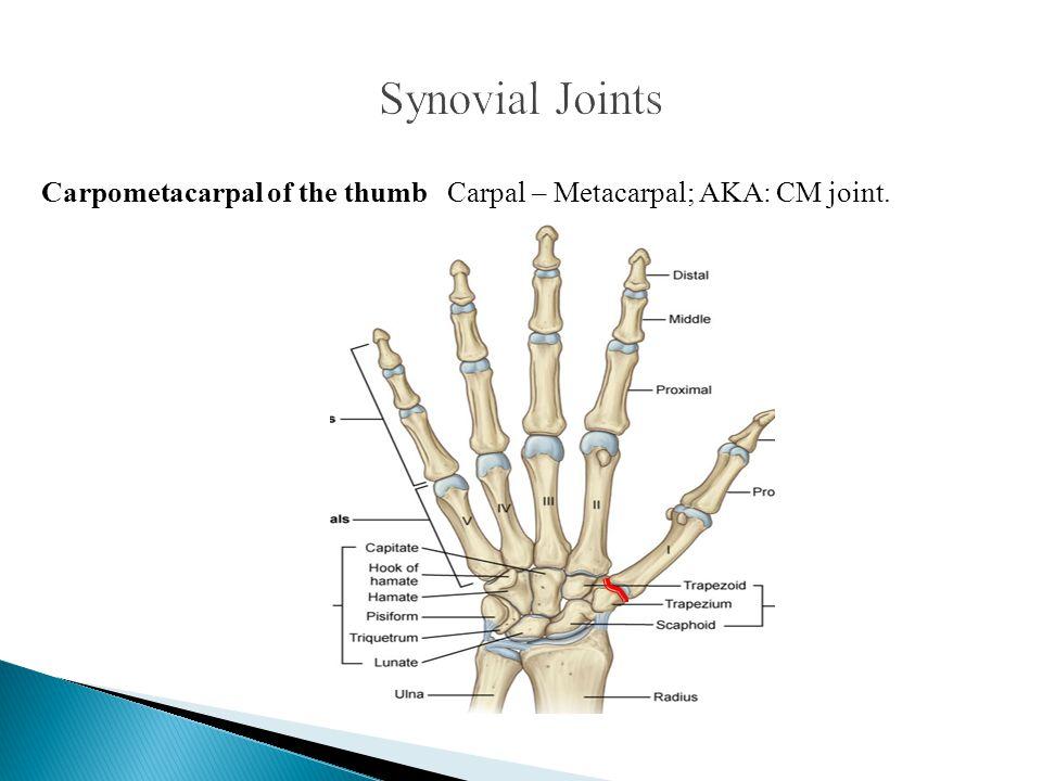 Carpometacarpal of the thumb Carpal – Metacarpal; AKA: CM joint.