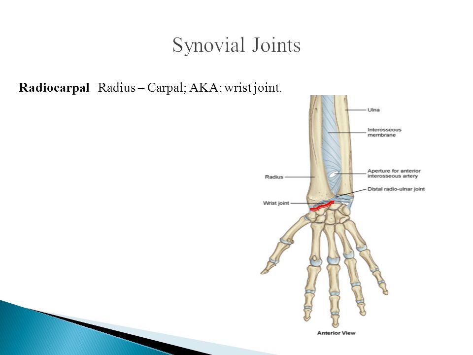 Radiocarpal Radius – Carpal; AKA: wrist joint.