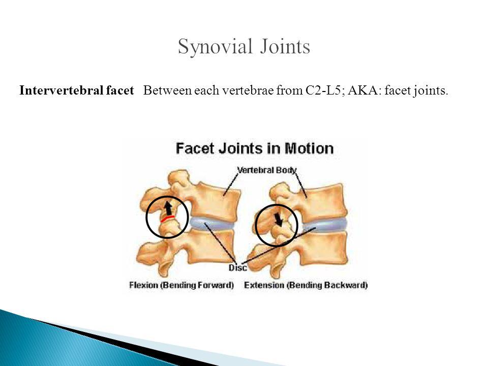 Intervertebral facet Between each vertebrae from C2-L5; AKA: facet joints.