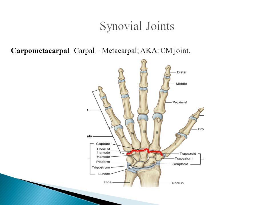 Carpometacarpal Carpal – Metacarpal; AKA: CM joint.