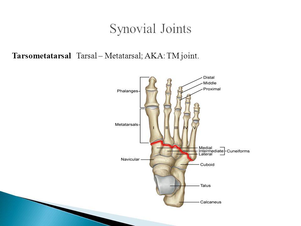 Tarsometatarsal Tarsal – Metatarsal; AKA: TM joint.